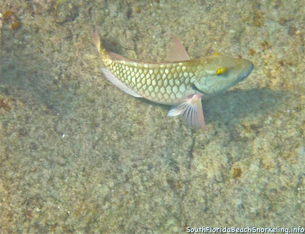 Corky_Reef_SouthFloridaBeachSnorkeling.info-03.jpg