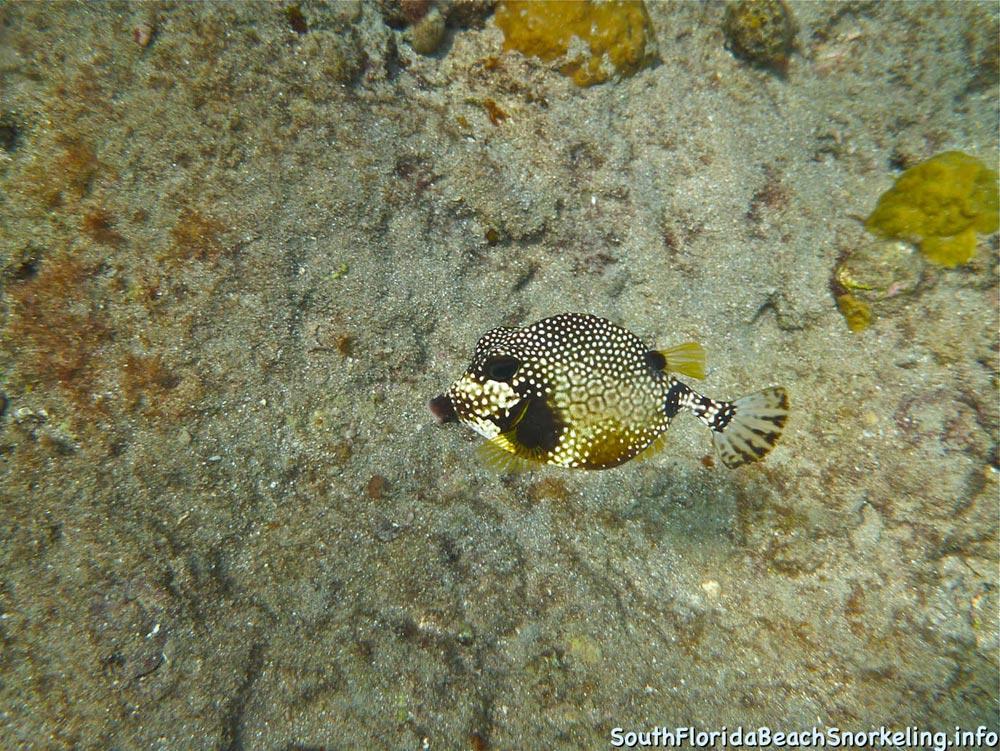 Corky_Reef_SouthFloridaBeachSnorkeling.info-14.jpg