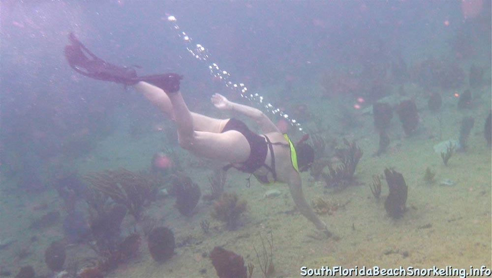 Corky_Reef_SouthFloridaBeachSnorkeling.info-19.jpg