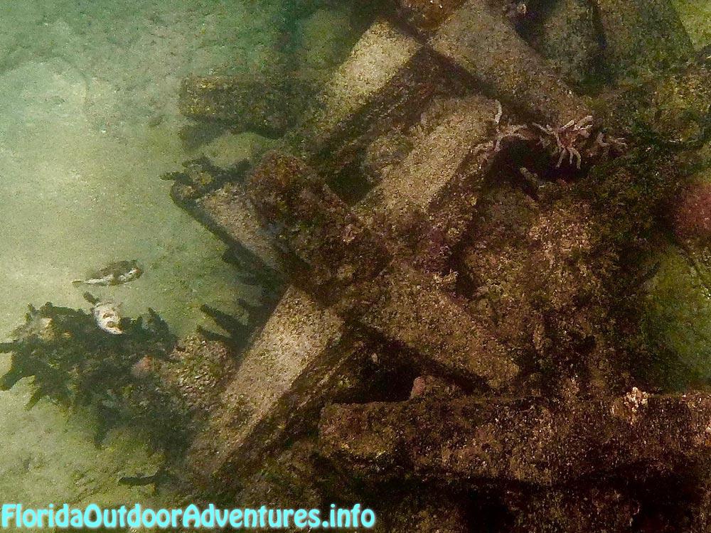 FloridaAutdoorAdventures.info-04.jpg