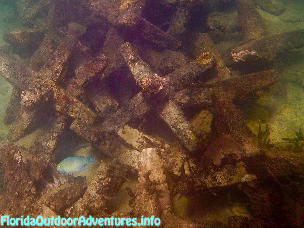 FloridaAutdoorAdventures.info-12.jpg