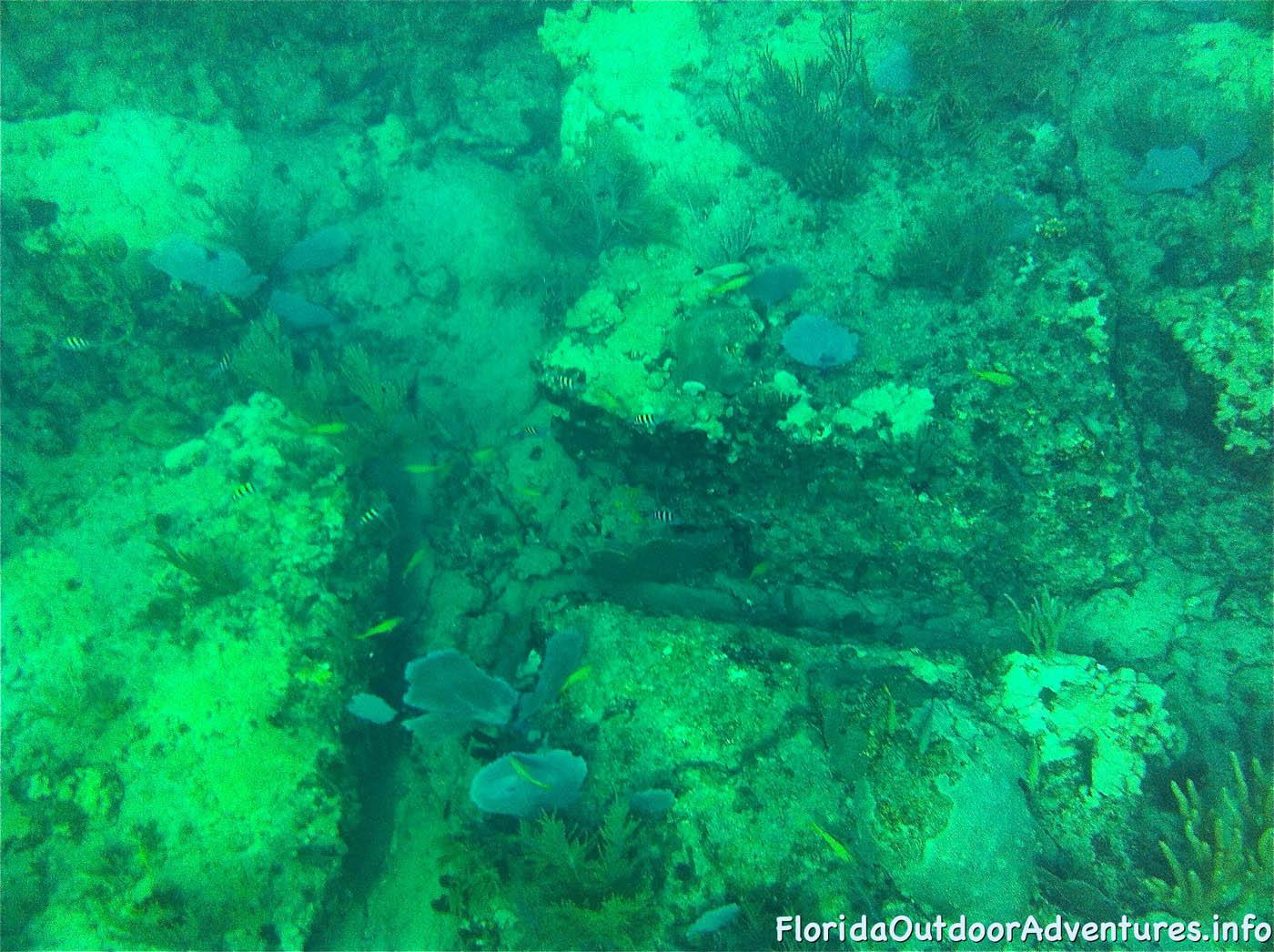 floridaoutdooradventures.info-09.jpg