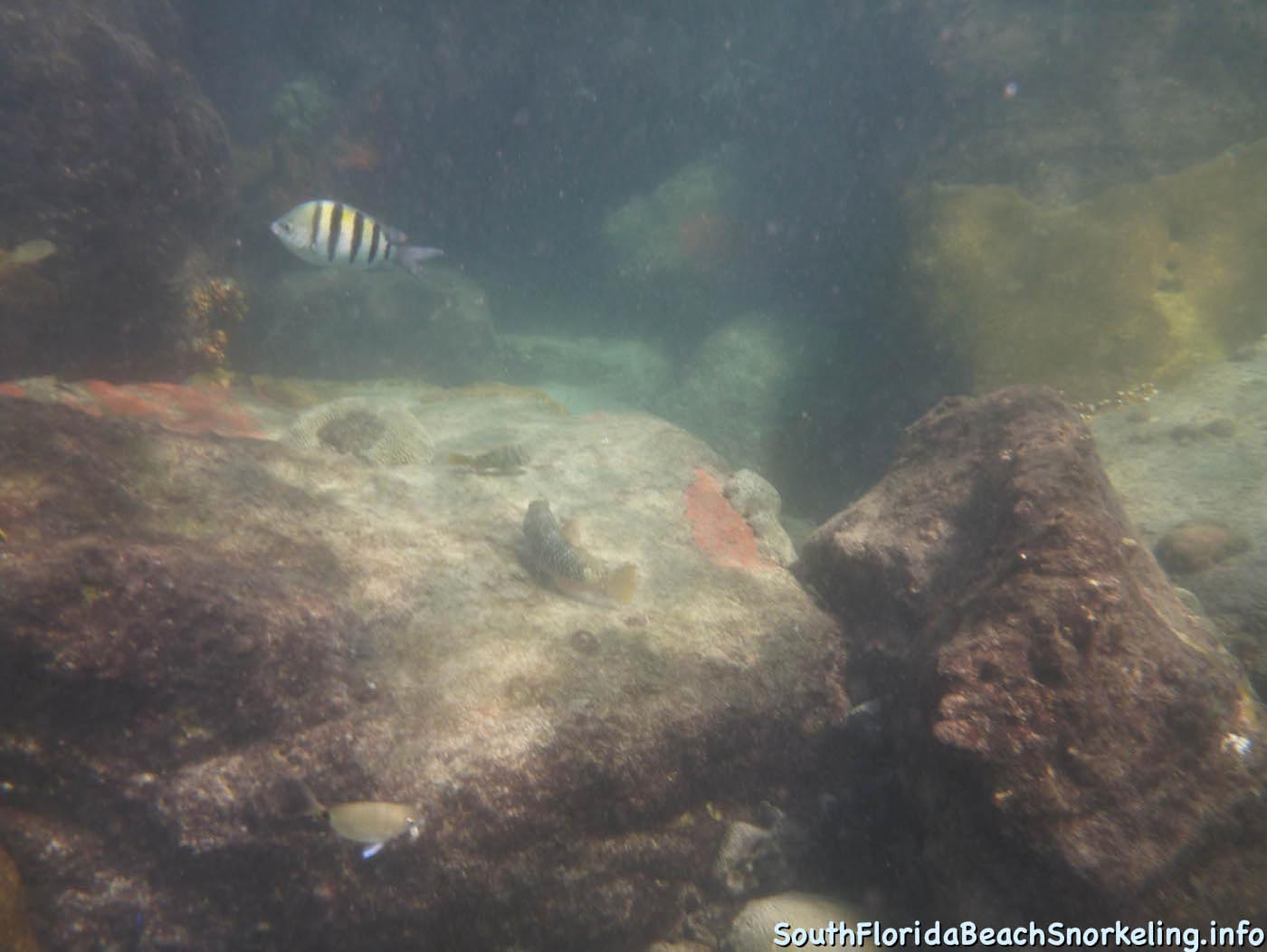 South_Side_Jetty_of_Port_of_Palm_Beach-southfloridabeachsnorkeling.info-02.jpg