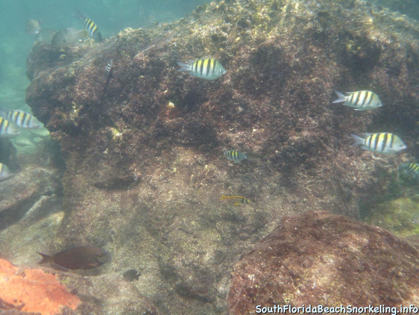 South_Side_Jetty_of_Port_of_Palm_Beach-southfloridabeachsnorkeling.info-17.jpg