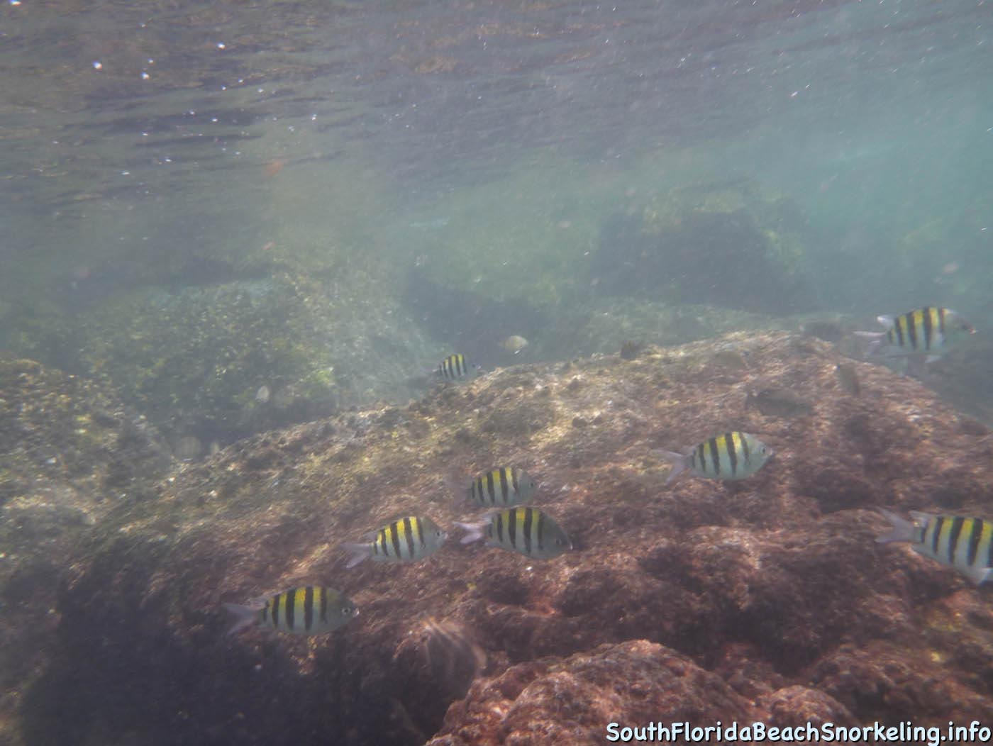 South_Side_Jetty_of_Port_of_Palm_Beach-southfloridabeachsnorkeling.info-18.jpg