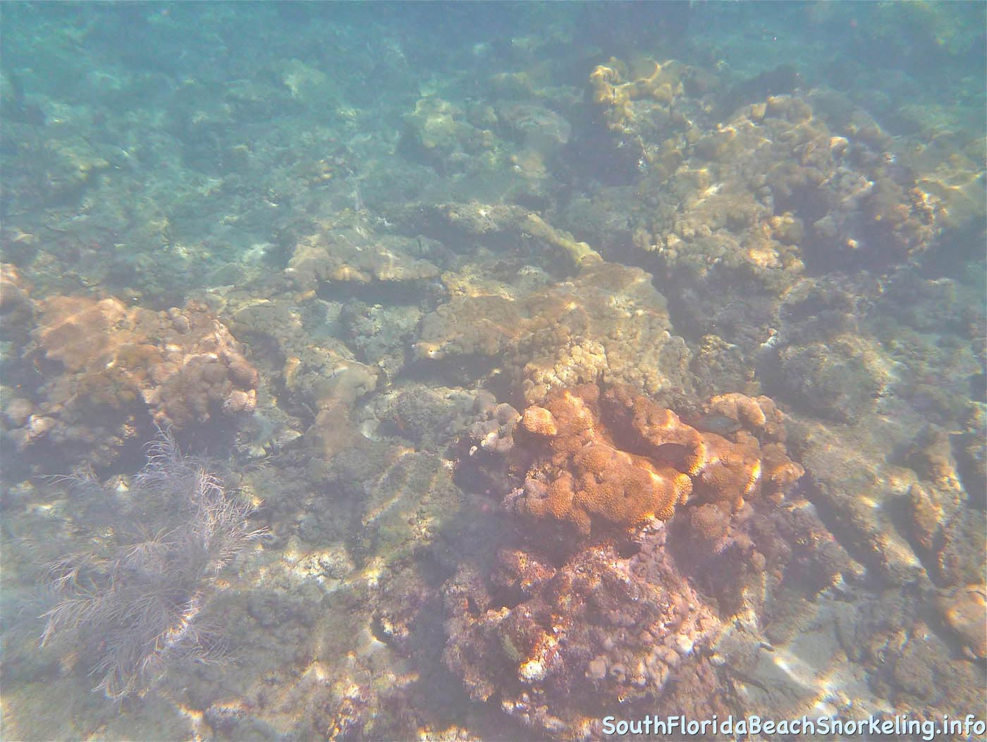 First_Snorkel_of_2012-10.jpg
